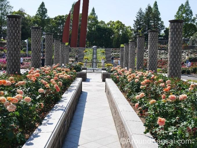 荒牧バラ公園の正面ゲートを入るとバラに囲まれた円柱が