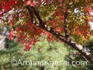 清流園で見つけた紅葉