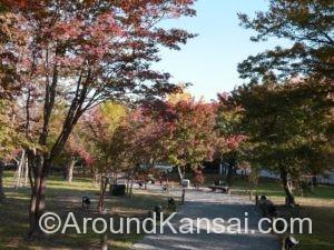 清流園の木々が色づいてきていました
