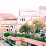 桜が咲いている宝塚大劇場の外観