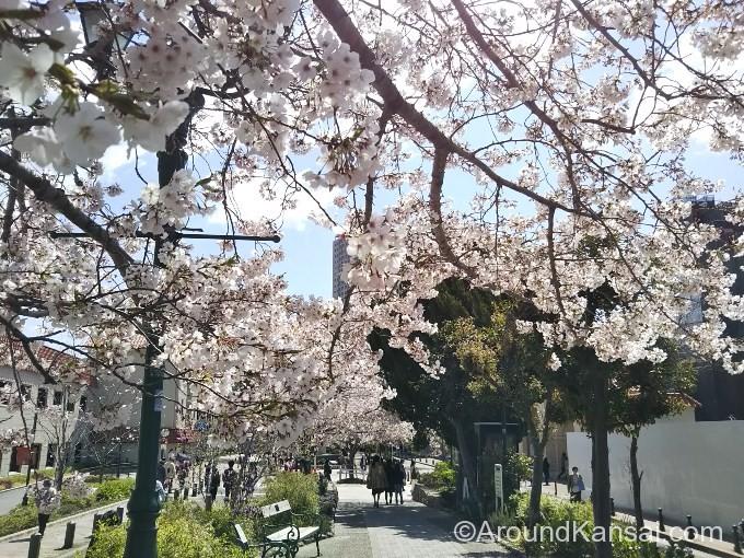 花のみちを歩いていきます。桜の季節はとってもキレイです